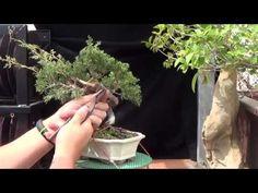 Alambrando con cobre - junipero itoigawa shohin - YouTube
