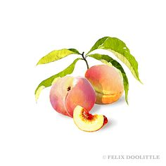 Watercolor painting by Felix Doolittle. | Stationery