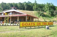 Goats on the Roof Pigeon Forge, TN, just went yesterday! It's awesome!