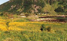 gelb blühende Wiesen am Eidsfjord, Foto: S. Kretschmer