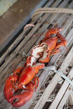 lobster #Joe'sCrabShack #Joe'sMainEvent