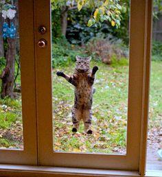 photo funny-cat-21.jpg