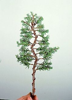 464 best the art of the bonsai images vegetable garden garden rh pinterest com