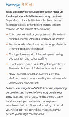 Therapy Fur All: A Primer on Rehabilitative Veterinary Medicine for Pets
