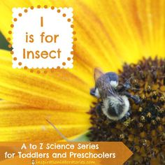 I is for Insect Investigations in the A to Z Science series for toddlers and preschoolers. Observe insects and compare their features. Preschool At Home, Preschool Science, Toddler Preschool, Science Fun, Science Ideas, Science Projects, Science For Toddlers, Summer Activities For Kids, Lessons For Kids
