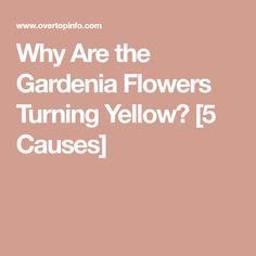 Gardenia Care, Gardenias, Creamy White, White Flowers, Turning, Yellow, Sweet, Candy, Wood Turning