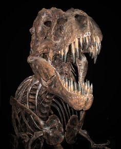 T.rex, Musée Smithsonian d'histoire naturelle. Photo : Quadell.