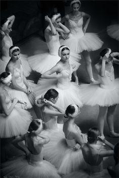 swans adjusting