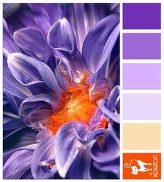Dahlia: Purple, Lilac, Orange | Designcat Colour Inspiration Board