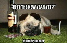 Drunk puggie