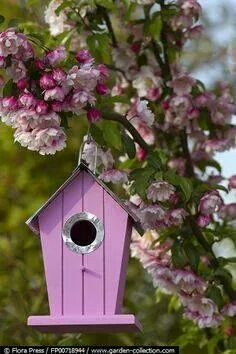Finally a purple bird house! Pink Garden, Garden Art, Bird Boxes, All Things Purple, Bird Cage, Beautiful Birds, Garden Inspiration, Bird Feeders, Lilac