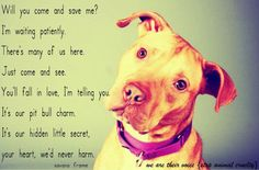 pitbulls are the best dogs :)