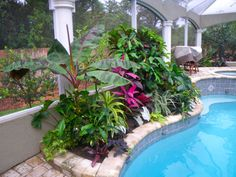 Tropical poolside landscape plantings pool planting for Landscaping rocks dothan al