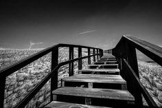 Steps 2016 Netherlands