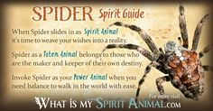 In-depth Spider Symbolism & Spider Meanings! Spider as a Spirit, Totem, & Power Animal. Plus, Spider in Celtic & Native American Symbols & Spider Dreams! - Pinned by The Mystic's Emporium on Etsy Spirit Animal Totem, Animal Spirit Guides, Animal Totems, Animal Meanings, Animal Symbolism, Spiritual Animal, Animal Medicine, Native American Symbols, Power Animal