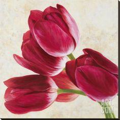 Tulip Concerto II Stretched Canvas Print by Luca Villa at Art.com