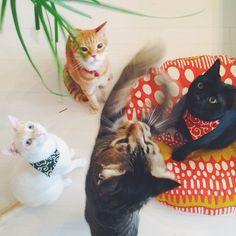 """ I toles ya before; if ya wanna gets a plant piece, ya can't just 'wish' it down.ya gotta work fur it. Whiskers On Kittens, Cats And Kittens, Kittens Cutest, Cute Cats, Animals And Pets, Cute Animals, Fancy Cats, Matou, Cat Bandana"