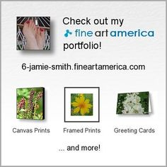 Fine Art America - Please Share with your friends I will be very grateful :) Valentines Art, Buy Photos, Very Grateful, Framed Prints, Canvas Prints, Life Photography, Fine Art America, Original Paintings, Artsy