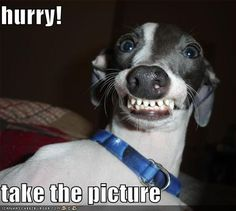 funny dog caption hurry take the picture
