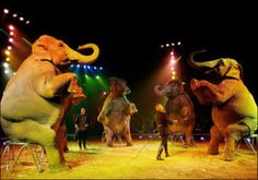 The End Of The Circus: Killing Elephants, Jobs, Magic, And A Treasured Way Of Life
