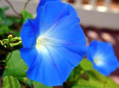 Mild to Intense, here we've listed 13 most common flowers that are poisonous. Every gardener should know about these toxic flowers.