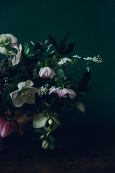 Winter Hellebores by Swallows & Damsons | Design*Sponge | Bloglovin'