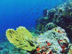 Happy sunday #scuba #colors #colorsplash #underwater #corals #coral #reef #fish #shark #diving #scubadiving #scubadive #nature #earth #earthpix #divemaster #padi #paditv #ocean #sea #fishies #scubaba #scubadiverslife #scubadiverlife #gopro #gorpooftheday #goprohero #goprouniverse #wonderful_places #wonderful by scuba.theo