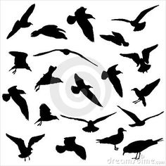 Seagulls silhouettes by Acoi, via Dreamstime