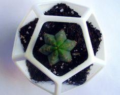 3D Printed  Dodecahedron Planter, Geometric Terrarium , Cactus Planter, Cactus Flower Guard, Geodesic Container, Math Art, Polyhedra