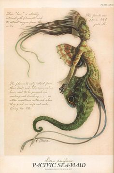 """Arthur Spiderwick - Merfolk, """"Field Guide to the Fantastical World around You"""", Merfolk are legendary aquatic creatures with the head and upper body of a human and the tail of a fish. Mythical Creatures Art, Mythological Creatures, Magical Creatures, Fantasy Creatures, Libro Gravity Falls, Spiderwick, Legends And Myths, Merfolk, Mermaid Art"""