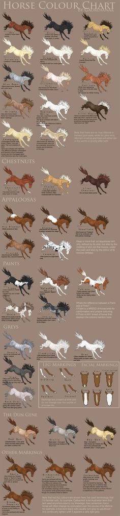 Horse Colour Chart vs 2 by Gaurdianax on deviantART: Horse Colour Chart vs 2 by Gaurdianax on deviantART: - Art Of Equitation All The Pretty Horses, Beautiful Horses, Animals Beautiful, Horse Color Chart, Colour Chart, Horse Facts, All About Horses, Horse Quotes, Horse Tips