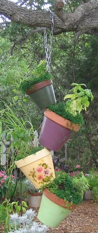 Grow herbs and spices organically in your backyard! Would be more likely to not have free range chickens eat them all up