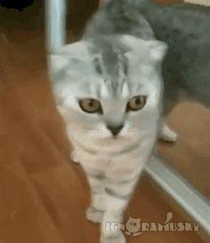 Aquele estranho momento quando voc� percebe que na verdade � um gato