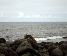 Galápagos 😍
