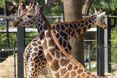 Barcelona Zoo by mariosp, via Flickr