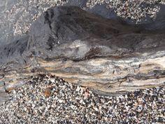 Petrified wood  Neutral Bay, NZ