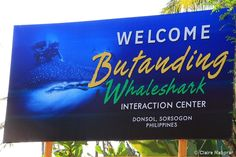 Donsol Sorsogon: Whale Shark Watching Travel Guide