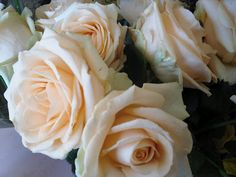Flowers in Bloom: 'Peach Avalanche' Rose