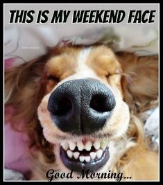 Good Day Quotes: This Is My Weekend Face weekend weekend quotes happy weekend weekend humor happy. - Quotes Sayings Good Morning Funny Pictures, Funny Good Morning Quotes, Good Day Quotes, Cute Love Quotes, Funny Quotes, Funny Memes, Humor Quotes, Morning Pics, Smile Quotes