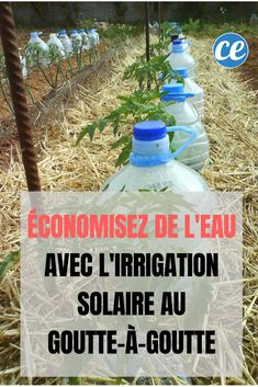 Save Water This Summer With Drip Solar Irrigation. Best Picture For Gardening Supplies For Your Taste You are looking for something, and it is going to tel Herb Garden, Vegetable Garden, Garden Plants, Garden Types, Gardening Supplies, Save Water, Horticulture, Spray Bottle, Planting Flowers