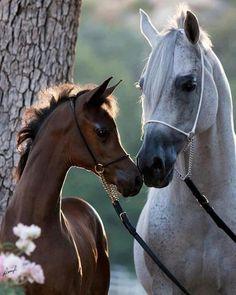 Beautiful Arabian mare & foal.....