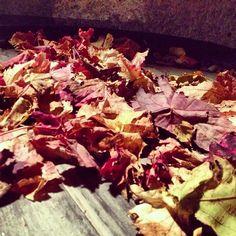 I colori dell'autunno in #italy #sardinia #sardegna #autumn - @igers_sardegna- #webstagram