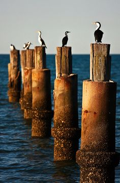 Sea birds on the coast