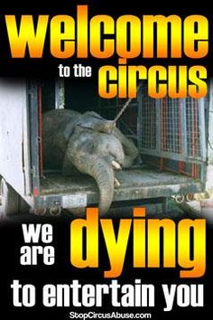 ABUSE is NOT entertainment! Download this poster 4 FREE at http://StopCircusAbuse.com ! #BoycottTheCircus #circusprotest