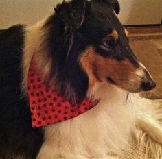 How to make a bandana. Reversible Over The Collar Dog Bandana - Step 20