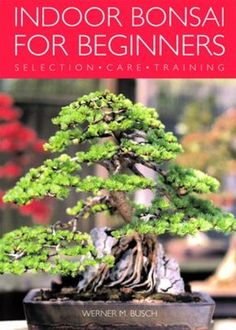 Booktopia has Indoor Bonsai for Beginners, Selection - Care - Training by Werner Busch. Buy a discounted Paperback of Indoor Bonsai for Beginners online from Australia's leading online bookstore. Bonsai Tree Types, Bonsai Tree Care, Indoor Bonsai Tree, Indoor Plants, Bonsai Trees, Indoor Trees, Mini Bonsai, Bonsai For Beginners, Gardening For Beginners