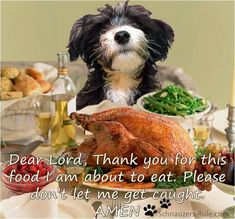 Thanksgiving Dog Prayers and Holiday Safety Tips for Dogs
