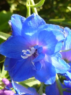 See-through blue