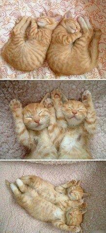 Orange tabby kittens - synchronized kittens
