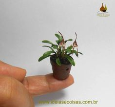 """More a thumbnail of Dracula Simia (Orchid with monkey face)- Handmade in mass of modeling cold porcelain """"Biscuit""""."""